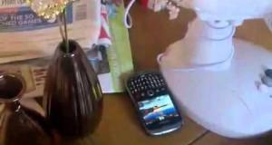Harvey Hamster Taking Mobile Phone